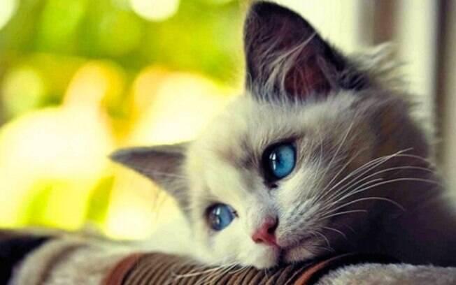 Confira dicas para conseguir tirar as melhores fotos de gatos!
