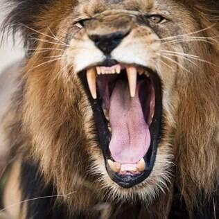 Leão será mais rigoroso com declarações de recibos entre pessoas físicas