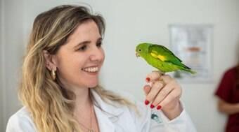 Tudo o que você precisa saber antes de ter um pássaro em casa