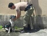 Policial dá banho de mangueira em cachorro que desmaiou na rua