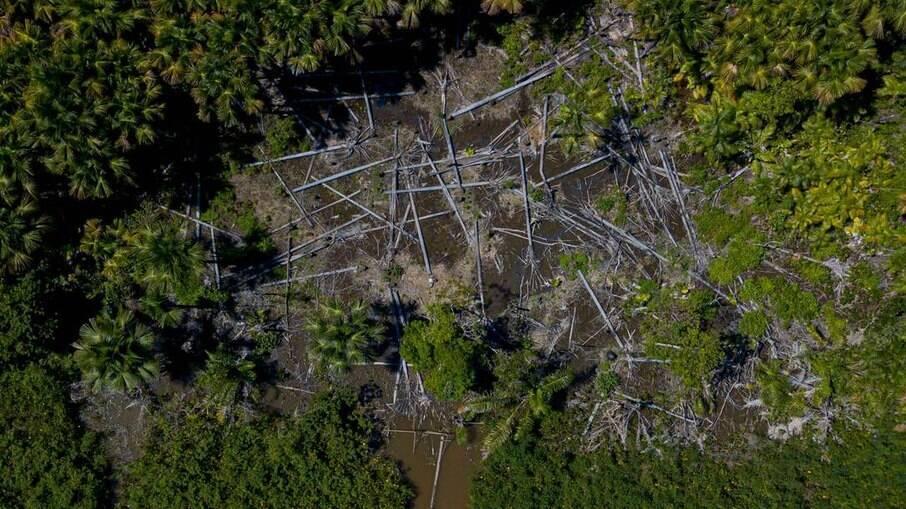 Área desmatada no Pará:  grileiros tiveram acesso a cronograma da operação da Polícia Federal