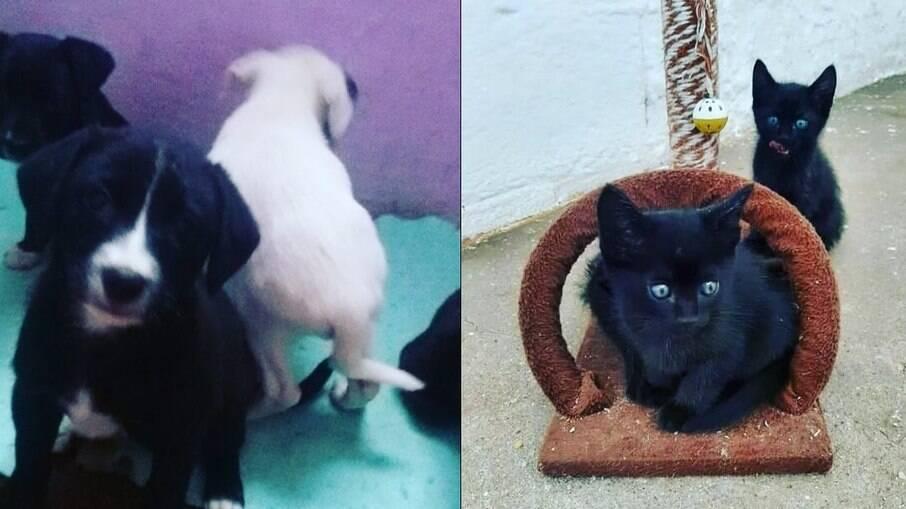 Feira de adoção para cães e gatos é realizada em shopping de São Paulo