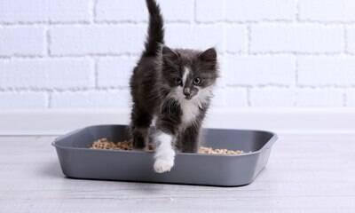 Veja os tipos de caixinha de areia e qual é a melhor para seu gato