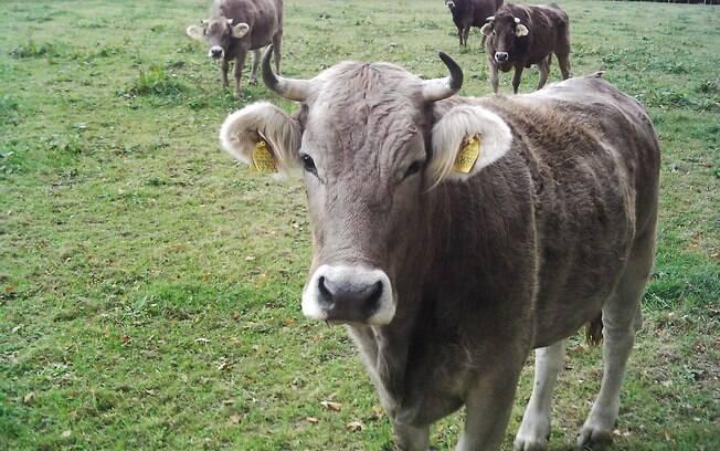 Apesar do senso comum, carne bovina é consumida por muitos cidadãos na Índia