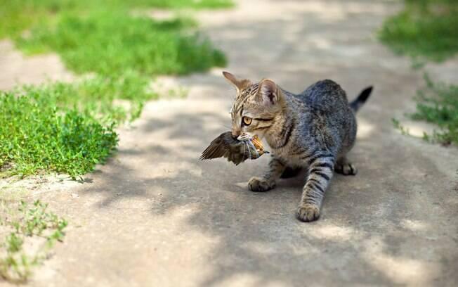 O presente do seu gato na verdade é ele tentando te ensinando a caçar