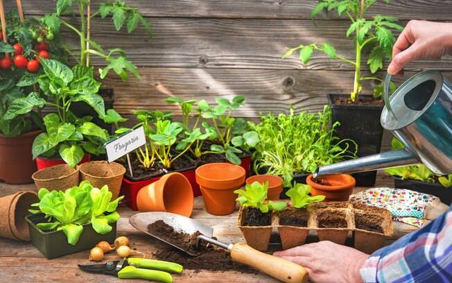Podar os temperos é um dos principais cuidados para garantir que eles cresçam saudáveis e saborosos