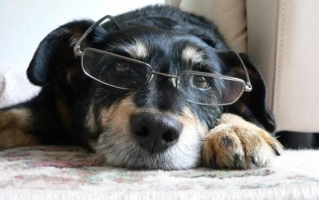 Quando a velhice chega para os cães, alguns sinais começam a aparecer