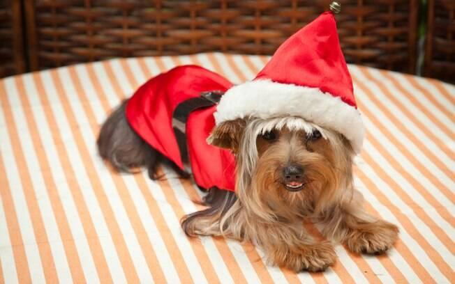 Seu pet fica lindo preparado para o Natal? Então manda correndo a foto dele pra gente!
