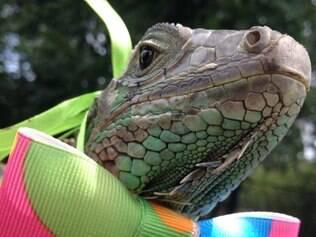 Iguana ganhou uma gravatinha de Carnaval