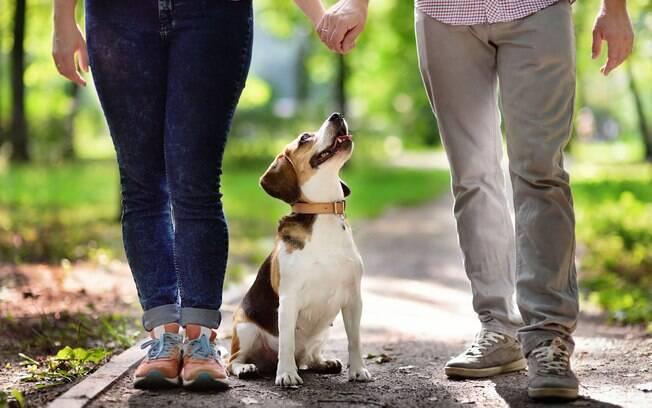Houve aumento de 40% nas hospedagens de cães em hotéis especializados