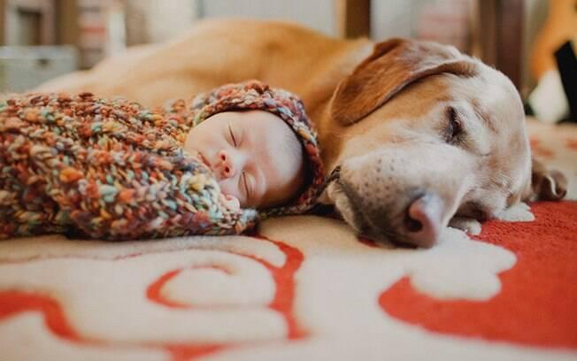 Cachorros fofinhos que adoram dormir com os bebês