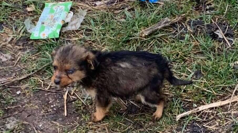 Coco foi encontrada chorando ao lado de uma pilha de lixo