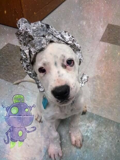 Cachorro com chapéu