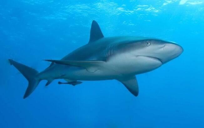 O aparelho de Collin e Simon Brooker tem como objetivo afastar os animais dos humanos, evitando ataques de tubarão
