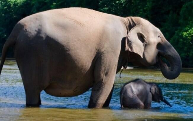 Uma elefanta com seu filhotinho.