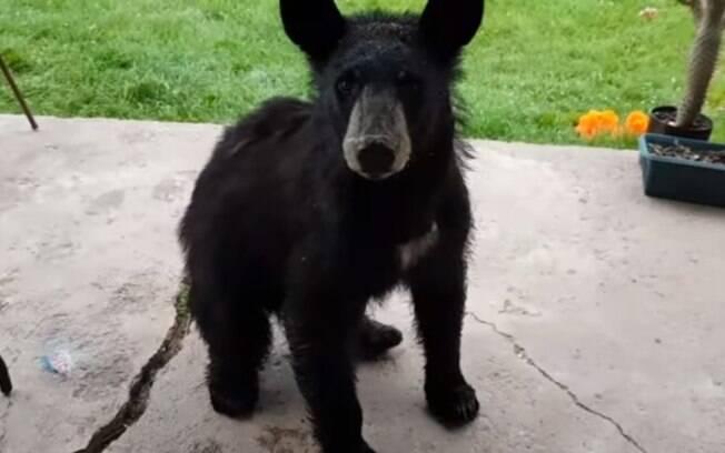 A canadense, dona de uma casa em Ontário, encontrou um urso na porta de sua residência