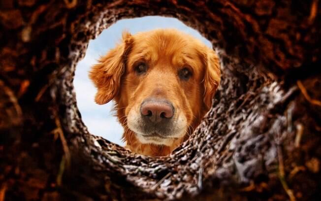 O cachorro que cava buracos no jardim pode ter diferentes motivos para isso