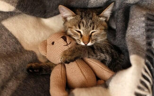 Tente distrair o gato colocando trazendo outros sons para dentro da casa
