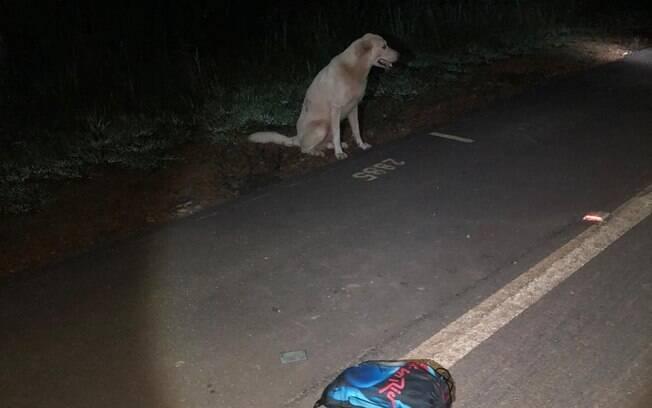 O cão permaneceu ao lado do corpo a madrugada toda