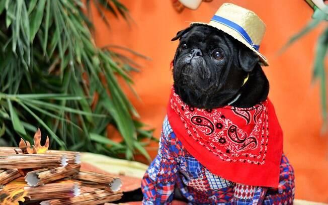 Confira algumas receitas para curtir com o pet durante período de festa junina