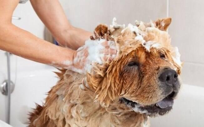 Os banhos no ofurô, com xampus especiais e direito a relaxar são ótimos para os cães