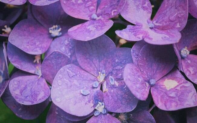 Simpatias fáceis com violetas para fazer em casa