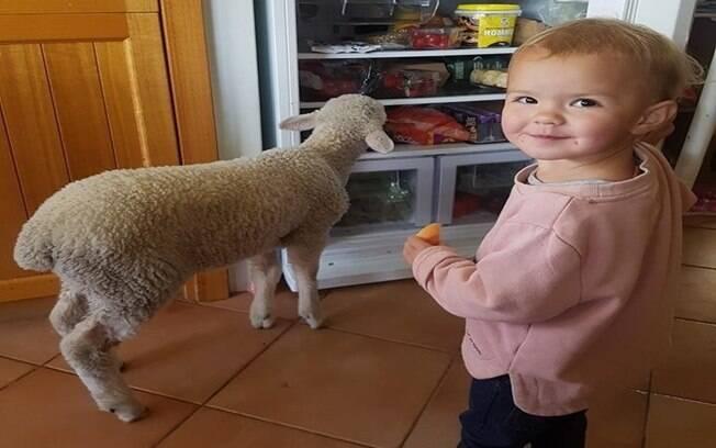 Pikelet, o cordeiro e Aurora, assaltando a geladeira