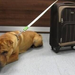 Cachorro é abandonado em estação de trem na Escócia