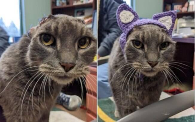 Gata Lady com orelhas de crochê
