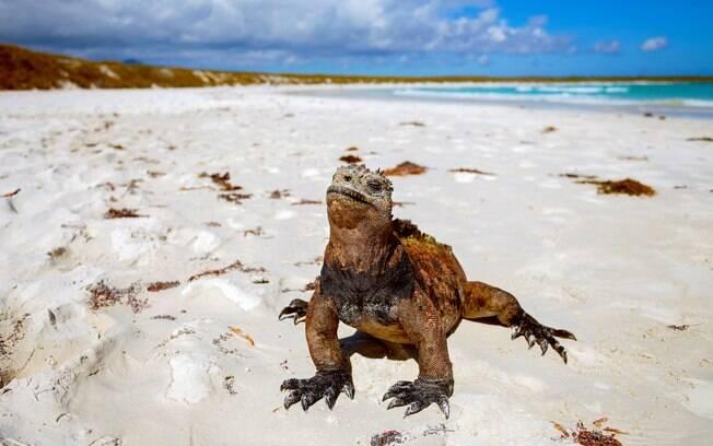 As Ilhas Galápagos possuem a maior diversidade de fauna e flora do planeta