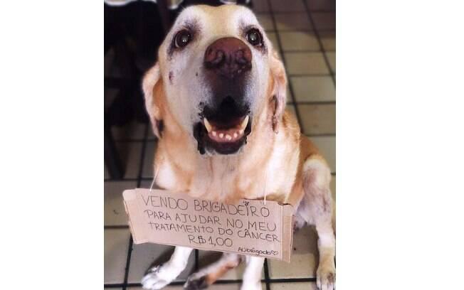 O cachorro Apolo tem 11 anos e foi diagnosticado com tumores no pulmão, baço e na região do tórax