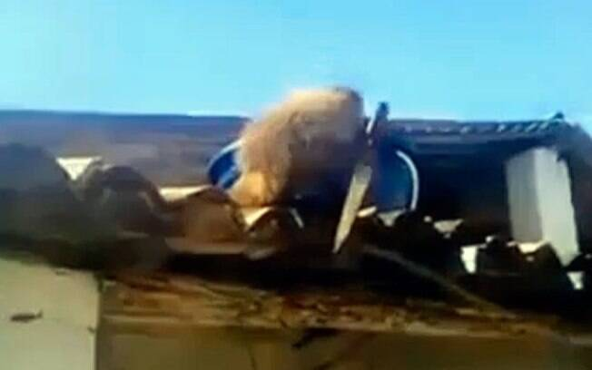 Macaco pegou faca, subiu no telhado de bar na Paraíba e aterrorizou clientes