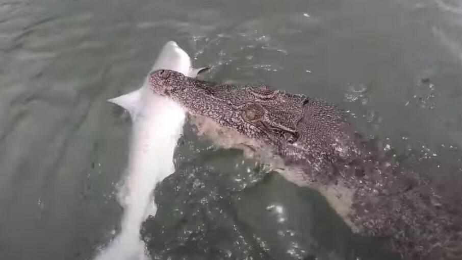 Imagens da batalha foram compartilhadas pelo pescador nas redes sociais; confira