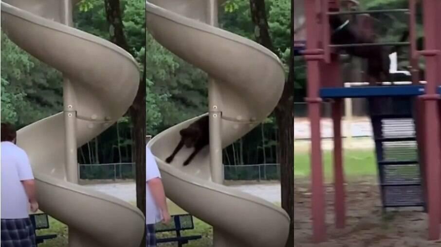 Cachorro se divertindo em escorregador viraliza nas redes sociais