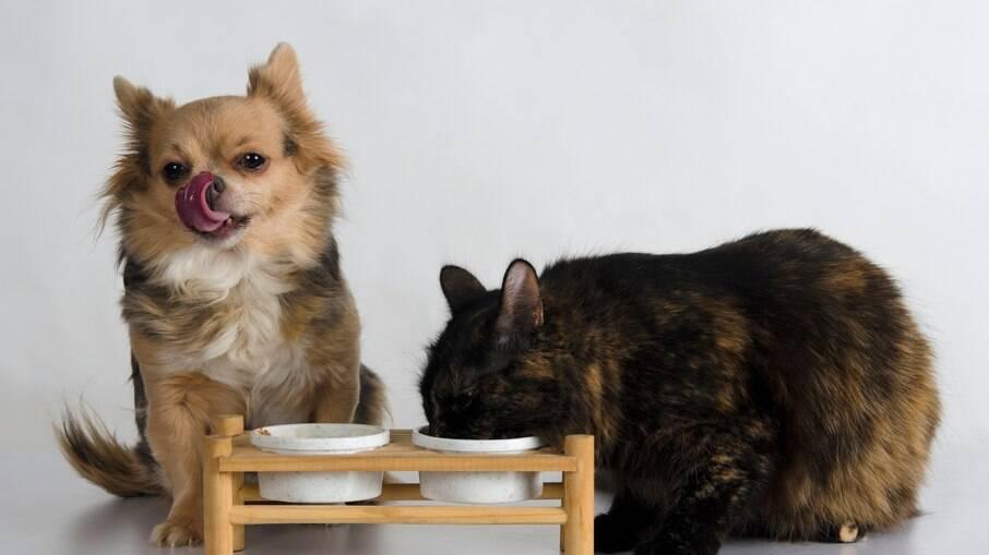 O comedouro suspenso é muito importante para melhorar a alimentação do animal