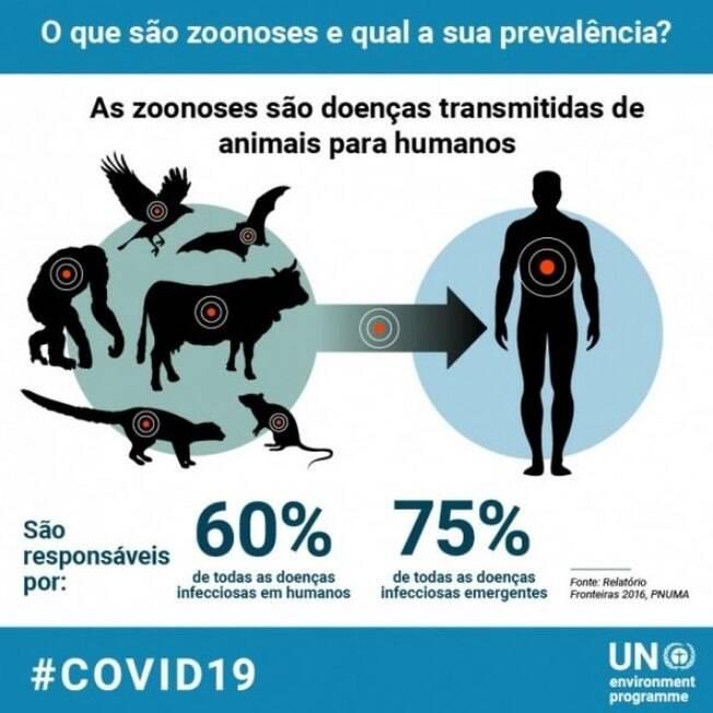 Animais são principais responsáveis pela transmissão de doenças infecciosas