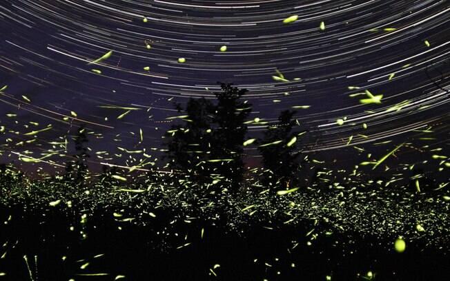 Vaga-lumes estão ameaçados pela iluminação luminosa e pelo uso de pesticidas