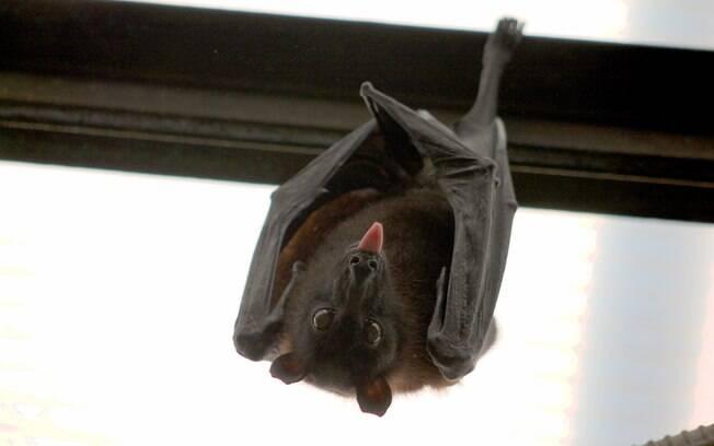 Morcego mordeu jovem de 14 anos