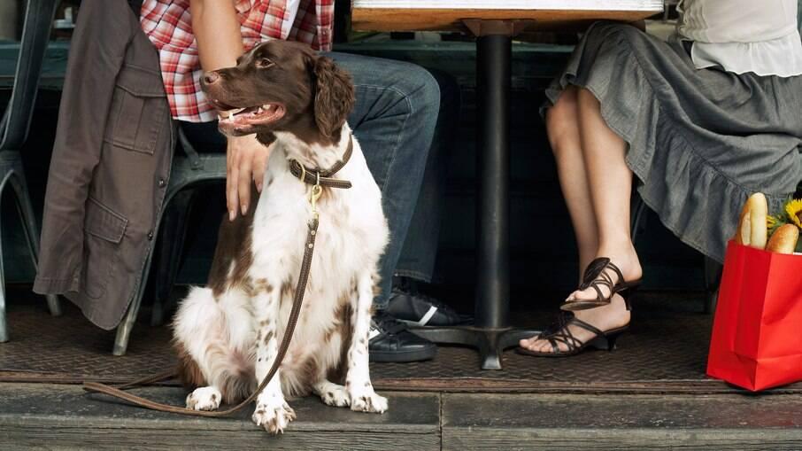 Muitos restaurantes estão se tornando pet friendly, mas nem todos estão totalmente abertos as necessidades dos tutores e seus pets