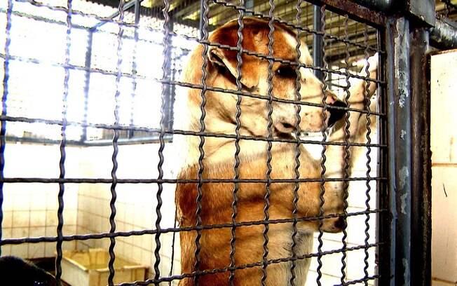 Não pense duas vezes para denunciar o abandono de animais