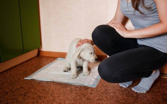 A fralda de chão pode ser um alternativa para cães que urinam em local indevido
