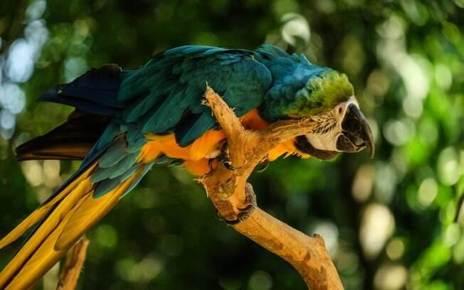 A melhor forma de prevenir piolhos em aves é através da higiene, vacinação e desparatização