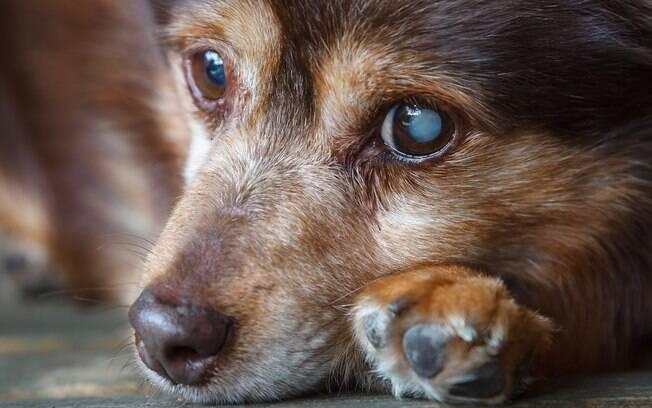 7 maneiras de ajudar animais de rua