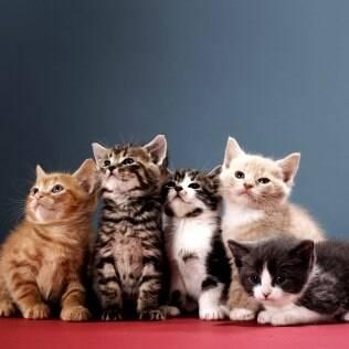 Dicas para cuidar do seu gatinho