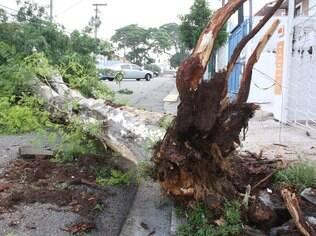 Queda de árvore interdita totalmente a rua Regente León Kaniefsky, no Morumbi, zona sul de São Paulo (12.01.15)