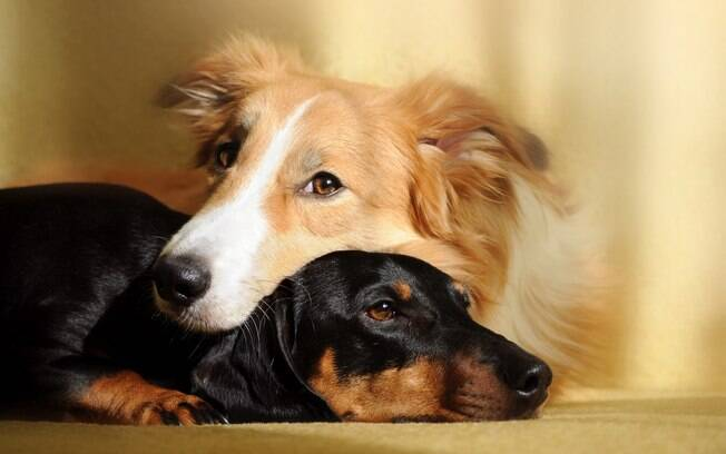 Para que os dois animais sejam amigos, é preciso que a conivência seja saudável desde a chegada do filhote em casa