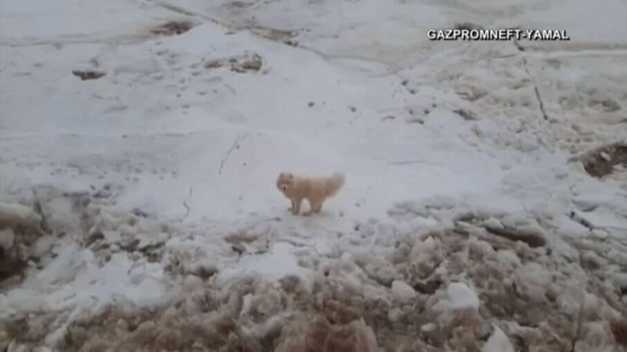 Cadela é salva por marinheiros após uma semana presa no gelo