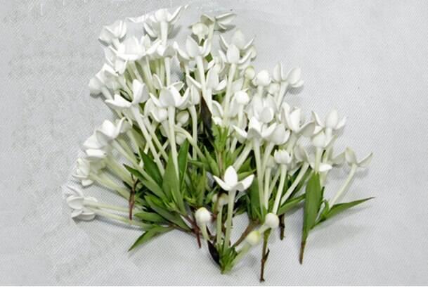 flores jardim guedala:Prepare um delicado arranjo floral na xícara – Jardinagem – iG