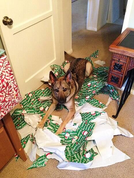 Esses cães e gatos resolveram destruir o natal e enlouquecer os donos