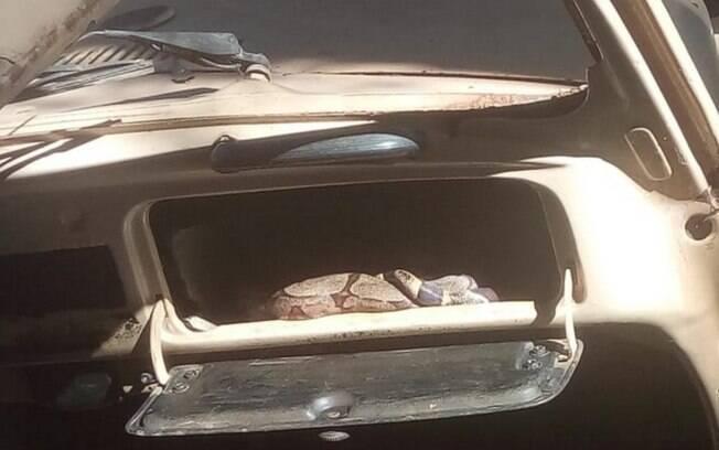 Vizinhos se assustaram ao ver cobra em porta-luvas de fusca abandonado, em Goiás.